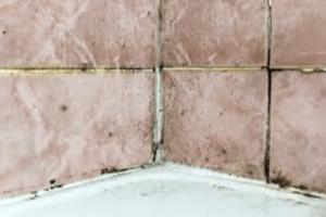 mould shown on bathroom ceramic tiles